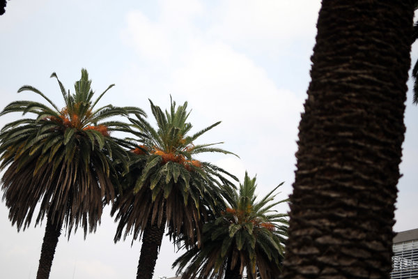 2017 World Endurance Championship, Mexico City, Mexico. 1st-3rd September 2017, Palm Trees  World copyright. JEP/LAT Images