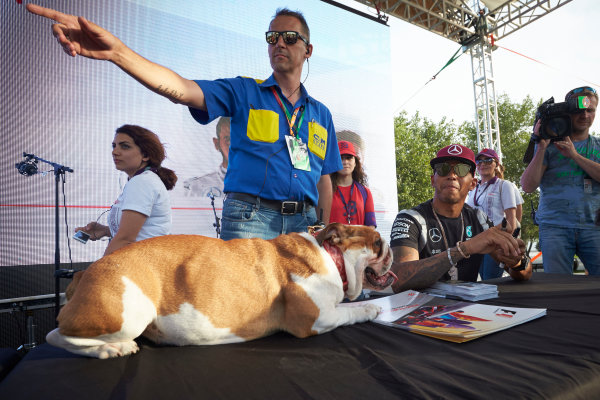 Baku City Circuit, Baku, Azerbaijan. Thursday 16 June 2016. Lewis Hamilton, Mercedes AMG, signs autographs as one of his dogs rests on a table. World Copyright: Steve Etherington/LAT Photographic ref: Digital Image SNE11850
